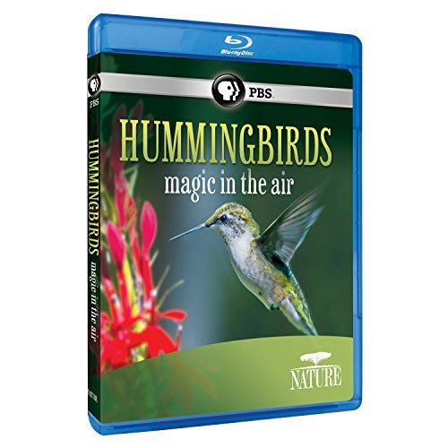 Nature Hummingbirds Pbs