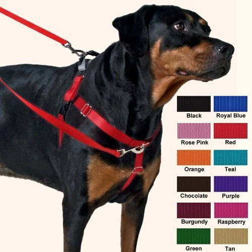 "Freedom 1"""" Harness Medium Red Freedom No Pull Dog Harness Training Package 1"" Medium Red"