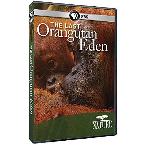 Nature The Last Orangutan Eden Pbs DVD