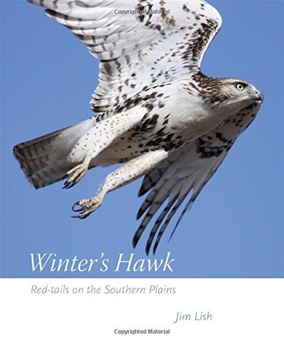 James W. Lish Winter's Hawk Red Tails On The Southern Plains