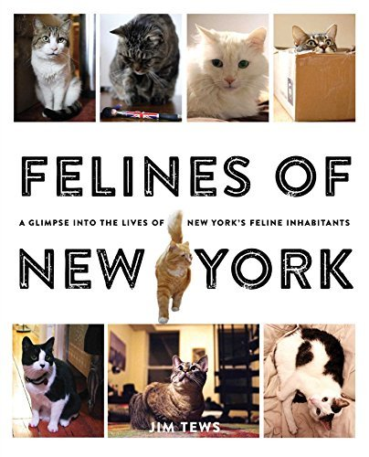 Jim Tews Felines Of New York A Glimpse Into The Lives Of New York's Feline Inh