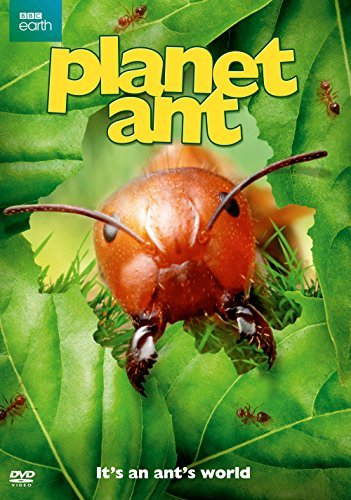 Planet Ant Planet Ant