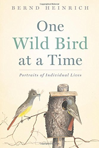 Bernd Heinrich One Wild Bird At A Time Portraits Of Individual Lives