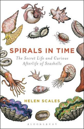 Helen Scales Spirals In Time The Secret Life And Curious Afterlife Of Seashell