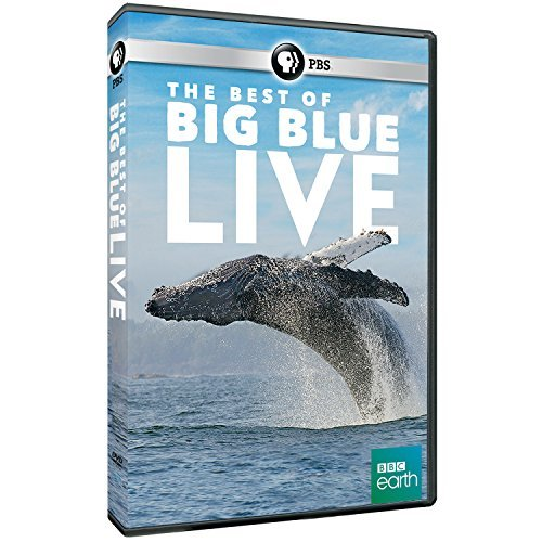 Best Of Big Blue Live Pbs DVD