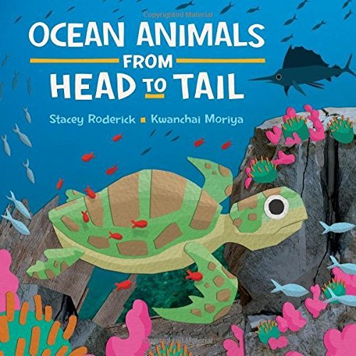 Stacey Roderick Ocean Animals From Head To Tail