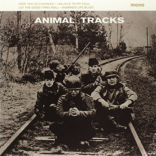 Animals Animal Tracks
