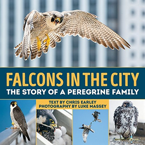 Chris G. Earley Falcons In The City The Story Of A Peregine Family