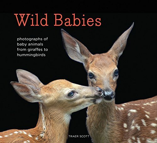 Traer Scott Wild Babies Photographs Of Baby Animals From Giraffes To Humm