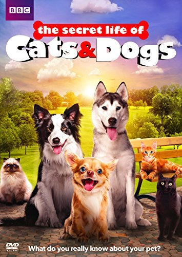Secret Life Of Cats & Dogs Secret Life Of Cats & Dogs