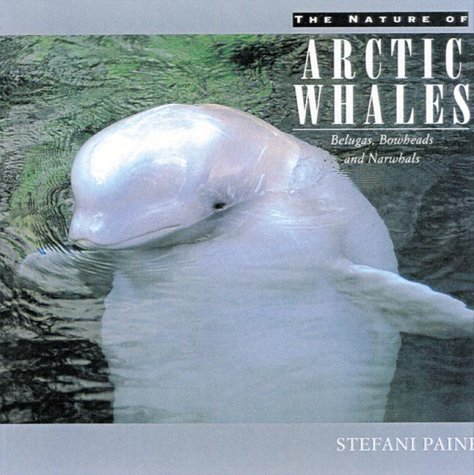 Stefani Paine The Nature Of Arctic Whales Belugas Bowheads & Narwhals