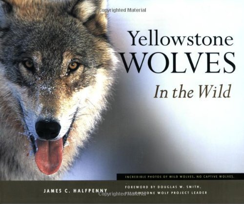 James C. Halfpenny Yellowstone Wolves In The Wild