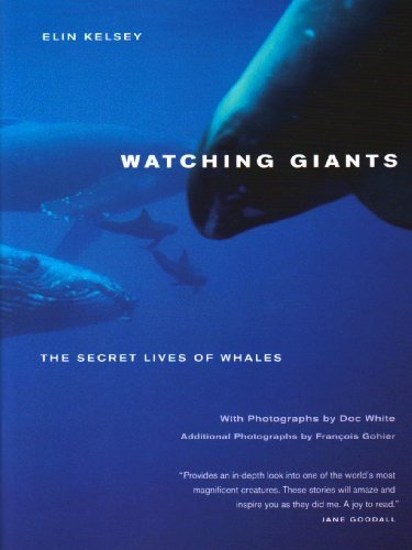 Elin Kelsey Watching Giants The Secret Lives Of Whales