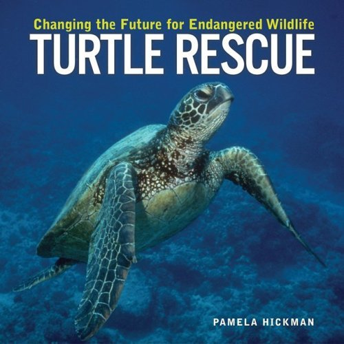 Pamela Hickman Turtle Rescue Changing The Future For Endangered Wildlife