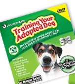 training-your-adopted-dog-training-your-adopted-dog