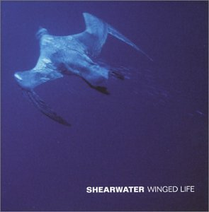 shearwater-winged-life