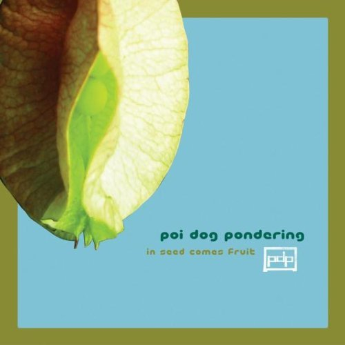Poi Dog Pondering In Seed Comes Fruit