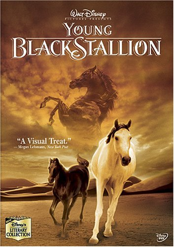 Young Black Stallion Young Black Stallion Ws Nr
