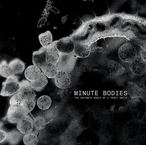 tindersticks-minute-bodies-intimate-world-import-gbr-incl-dvd