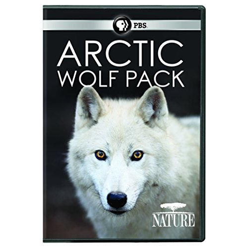 nature-arctic-wolf-pack-pbs-dvd-pg