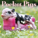 Wall Calendar 2019 Pocket Pigs The Famous Teacup Pigs Of Pennywell Farm