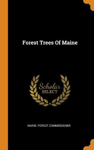 maine-forest-commissioner-forest-trees-of-maine