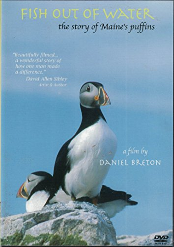 daniel-breton-fish-out-of-water-the-story-of-maines-puffins
