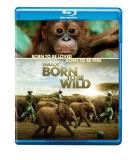 Born To Be Wild Imax Blu Ray Ws G Incl. DVD Dc