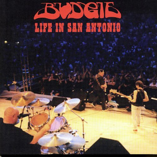 budgie-live-in-san-antonio-import-net