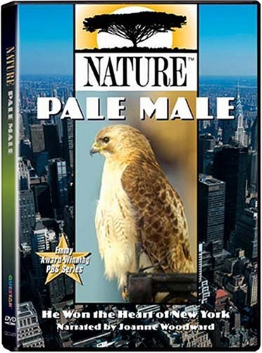 Pale Male Nature Nr
