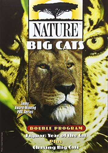 Big Cats Nature Nr
