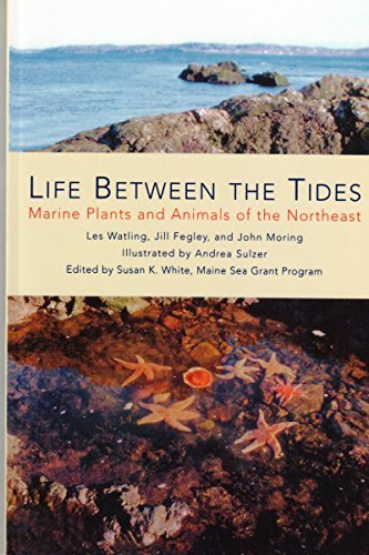 Les Watling Life Between The Tides Marine Plants And Animals Of The Northeast