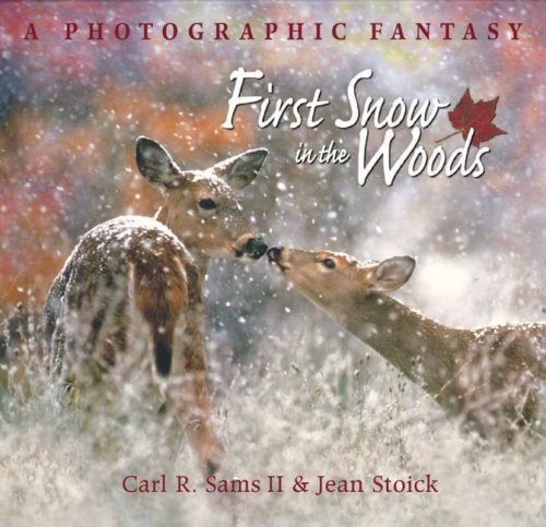 Jean Stoick First Snow In The Woods A Photographic Fantasy