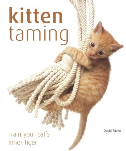 david-taylor-kitten-taming-train-your-cats-inner-tiger