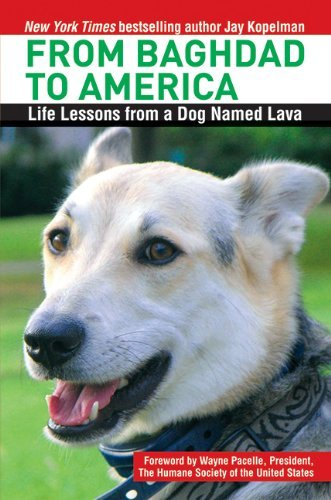 Jay Kopelman From Baghdad To America Life Lessons From A Dog Named Lava