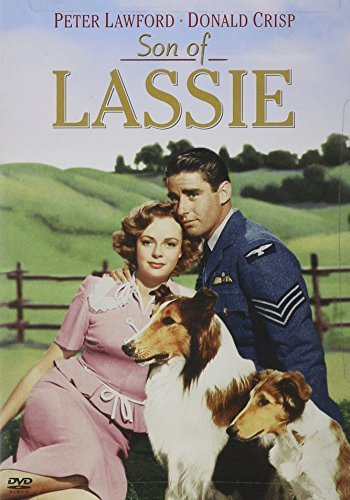 Son Of Lassie Son Of Lassie Clr Nr