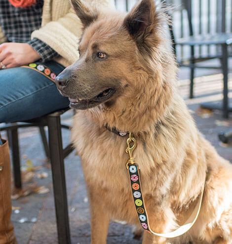 Pet Collars At Hollywood Feed