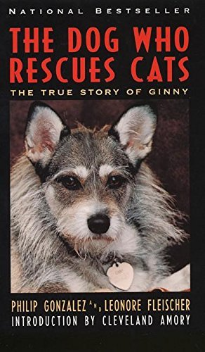 Philip Gonzalez The Dog Who Rescues Cats True Story Of Ginny The