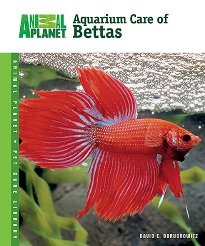 David E. Boruchowitz Aquarium Care Of Bettas