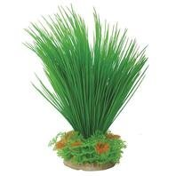 "Pure Aqu Hairgrass 8 12"""" Gr Or Natural Elements Hairgrass Bushy 8 12 In."