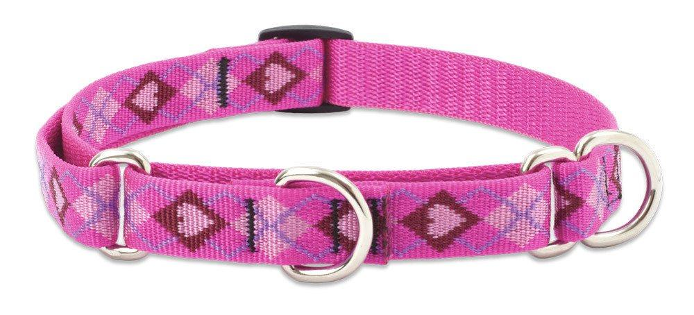 lupine-combo-collar-puppy-love-3-4-wide