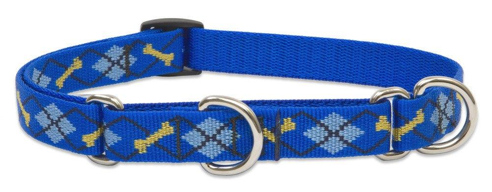 lupine-combo-collar-dapper-dog-3-4-wide