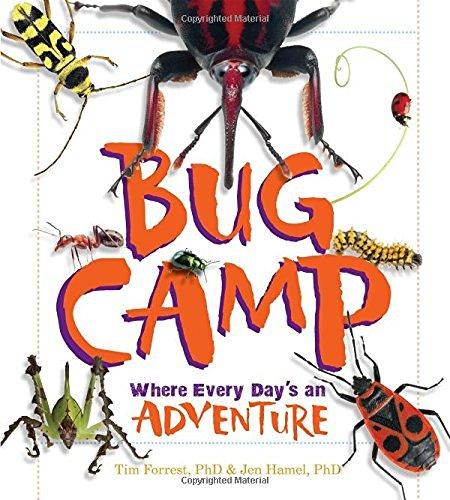 Tim Forrest Bug Camp Where Every Day's An Adventure