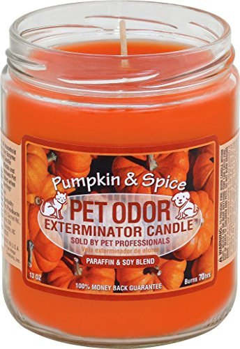 specialty-pet-candle-pumpkin-spice