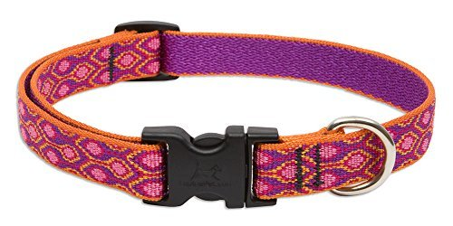 lupine-snap-collar-alpen-glow-3-4-wide