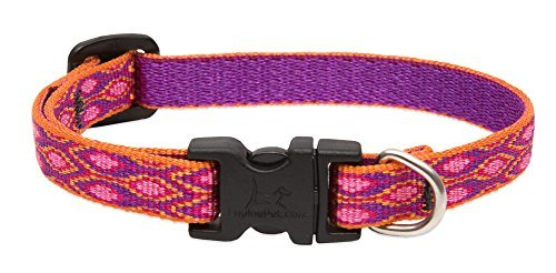 lupine-snap-collar-alpen-glow-1-2-wide
