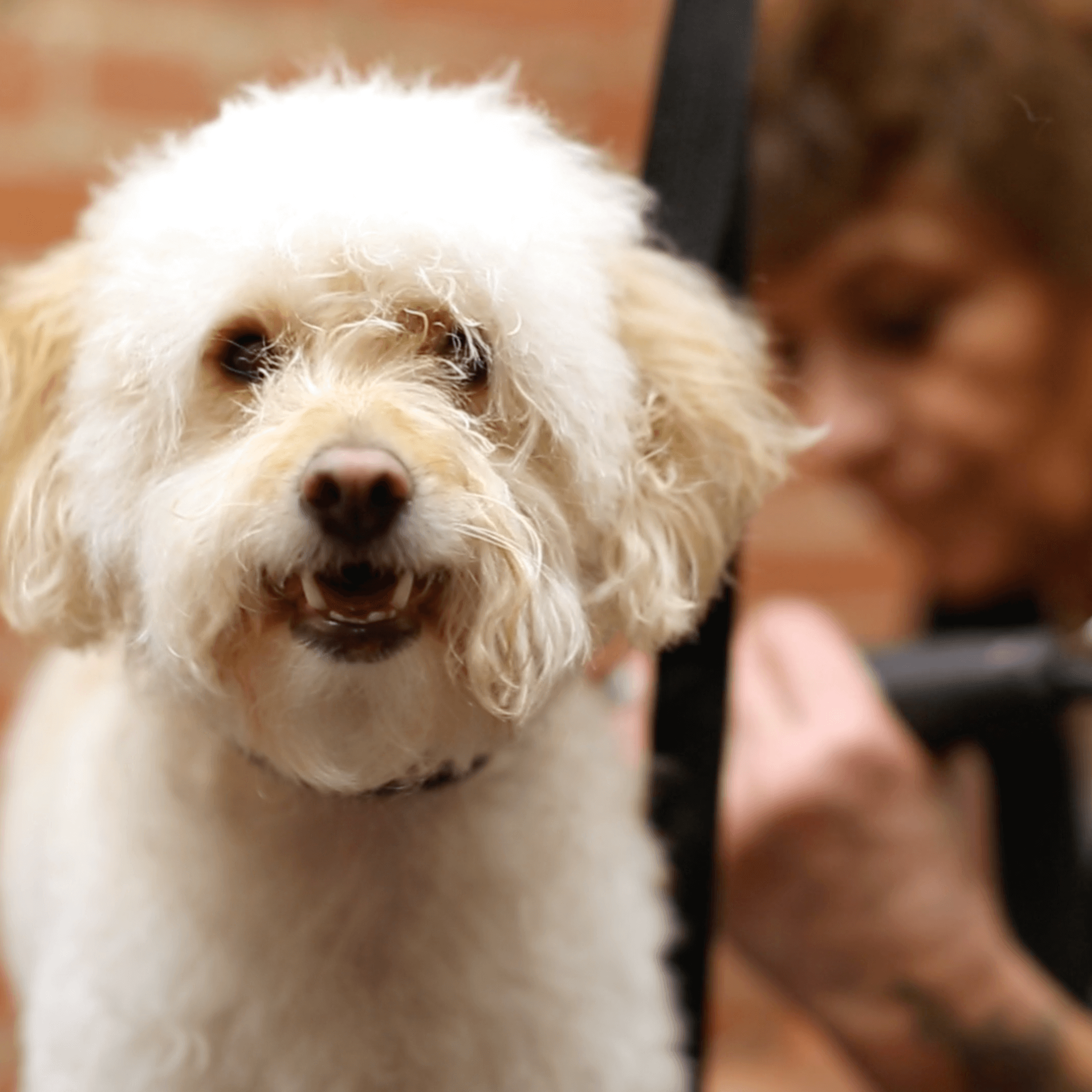 Dog Grooming Tips: Bathe Dog As Little As Possible