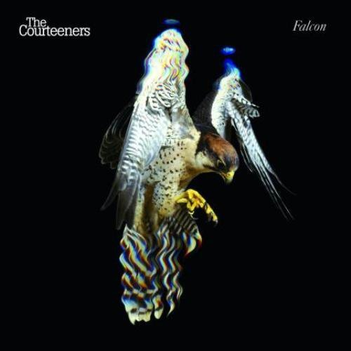 Courteeners Falcon