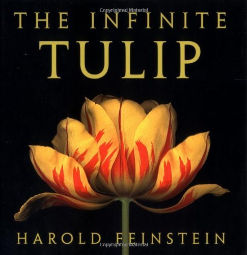 Harold Feinstein Infinite Tulip The