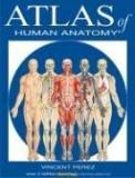 Vincent Perez Atlas Of Human Anatomy